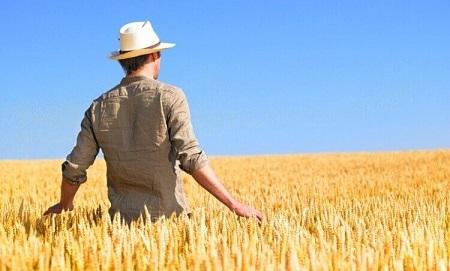 La Legge di Bilancio 2017 prevede incentivi contributivi per i coltivatori diretti (CD) e gl imprenditori agricoli professionali (IAP)